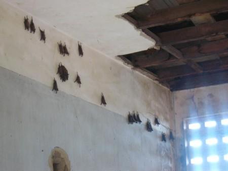 カンボジア  トゥールスレン虐殺犯罪博物館 【カンボジア】