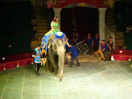 ベトナム  ハノイでサーカス観覧 熊の綱渡り 【ベトナム】