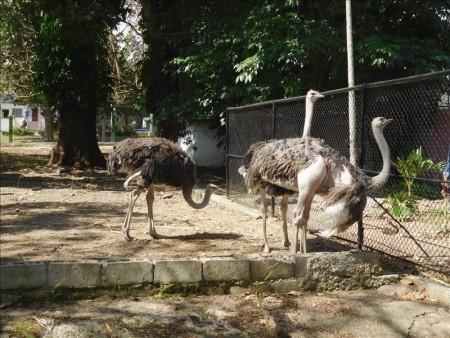 キューバ  ハバナで動物園を見学_Vol.1 【キューバ旅行】