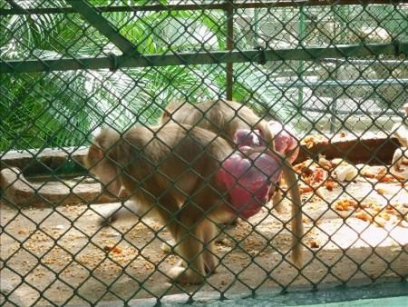 キューバ  ハバナで動物園を見学_Vol.2 【キューバ旅行】