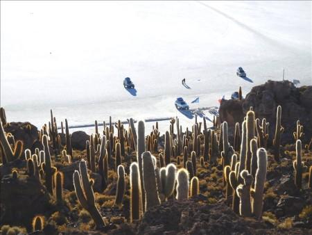 ボリビア  ウユニ塩湖にサボテン? インカワシ島に上陸