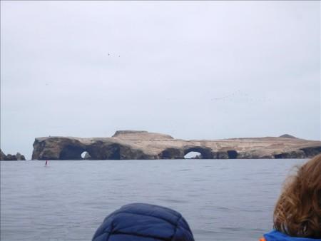 ペルー  リラックスした動物たちに会えるバジェスタス島ツアー