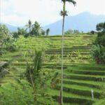 インドネシア  野生の猿と触れ合えるモンキーフォレストへ再び【バリ島】
