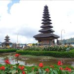 インドネシア  モンキーフォレストで見た猿たちの面白い表情【バリ島】