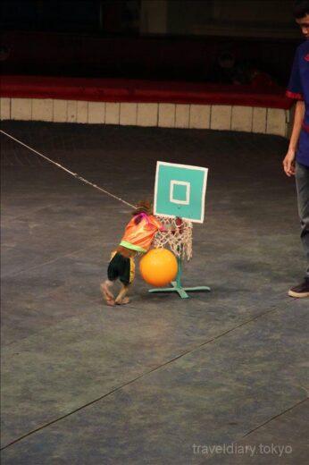 ベトナム  ハノイでサーカス_ヘビのショーを初めて見た【ベトナム】
